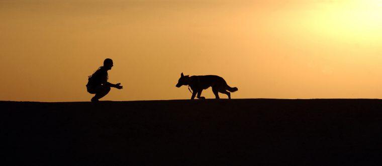 טיול עם החבר הכי טוב: איך מטיילים עם כלב בשטח?