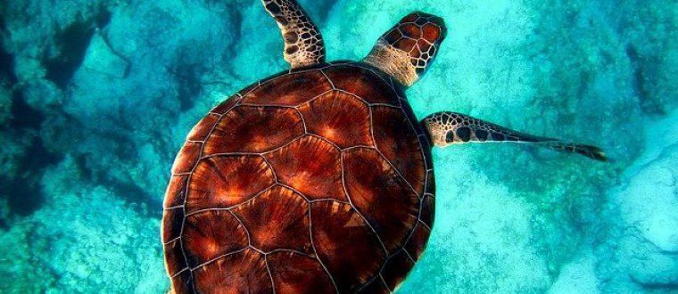 כל מה שרציתם לדעת טיולי צלילה בארץ
